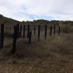 Old burned down sheep corral back in the hills